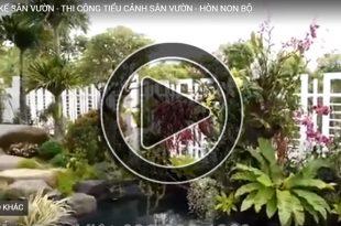 Phim 3D sân vườn tiểu cảnh hồ cá Koi nhà biệt thự